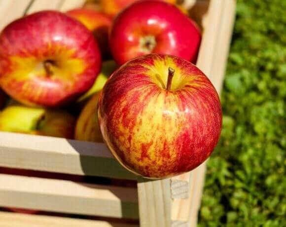 Belper Apple Day 2021 – What's On